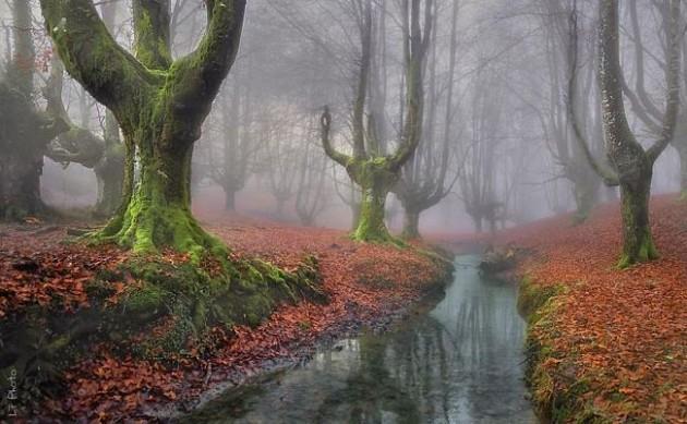 Floresta Otzarreta, País Basco, Espanha