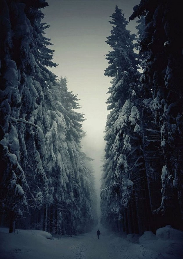 Floresta Bohemian - República Checa