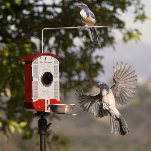 #16 - Alimentador de Pássaros com câmera embutida
