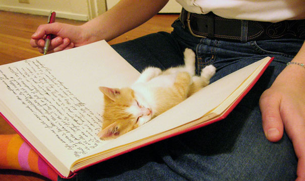 animals-dont-let-you-read-20__605