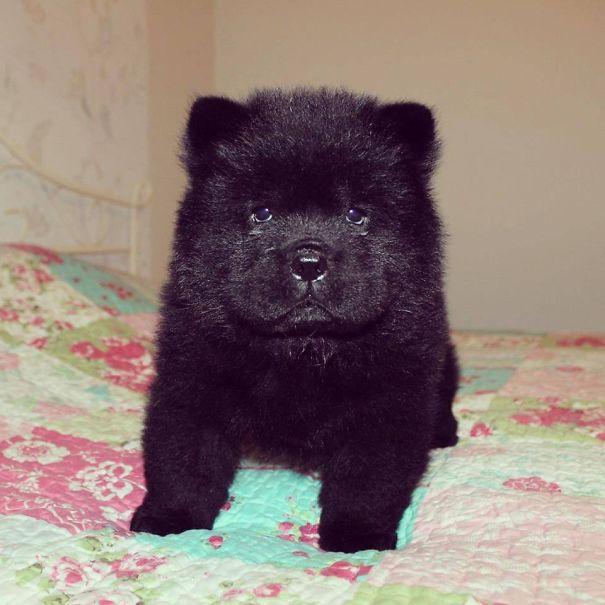 filhotes-parecem-com-ursos-de-pelúcia-20