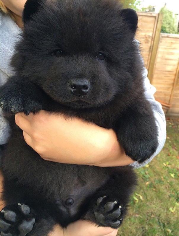 filhotes-parecem-com-ursos-de-pelúcia-3
