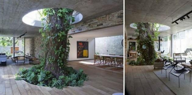Já pensou em ter uma árvore no meio da sua sala?