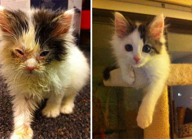 rescue-cat-abandoned-before-after-35__700