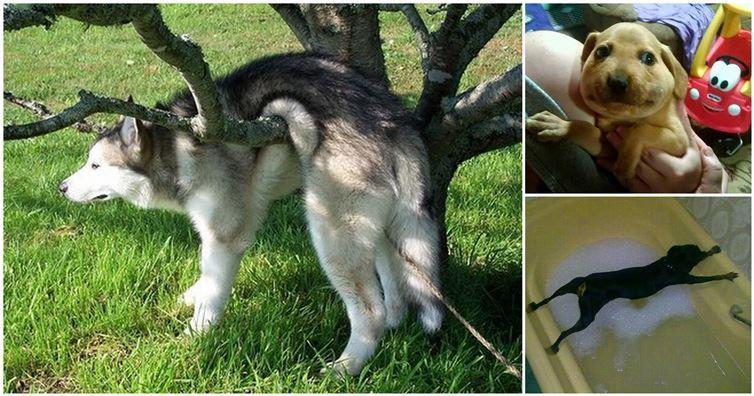 20 Animais que tiveram a pior escolha das suas vidas.