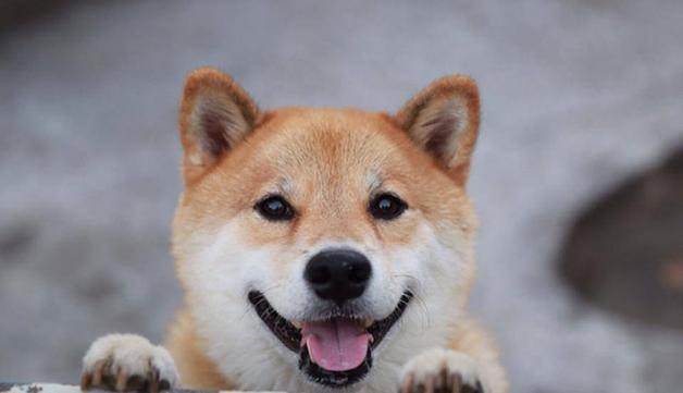 HappyMaru2
