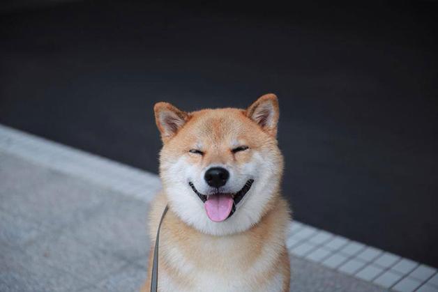 HappyMaru6