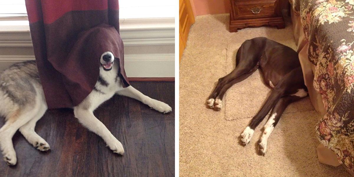 38 Provas de que cães não sabem brincar de esconde-esconde.