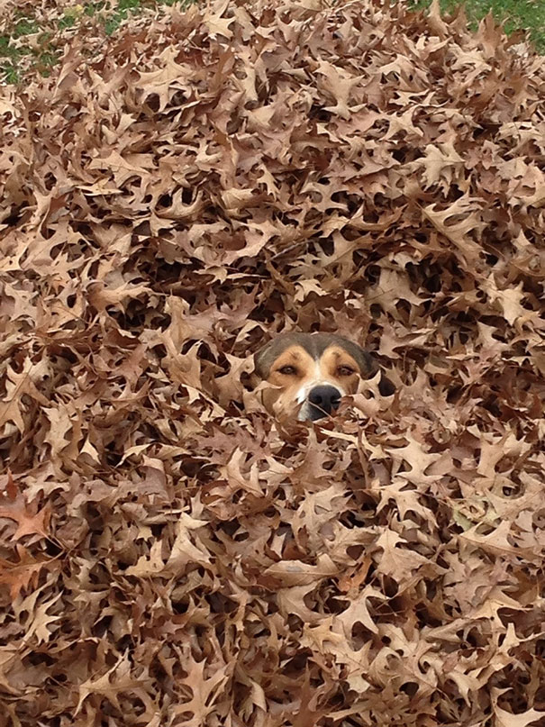 dogs-hide-seek-1__605