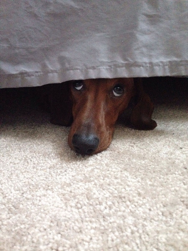 dogs-hide-seek-4__605