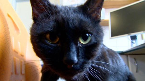 veterinary-nurse-cat-hugs-shelter-animals-radamenes-bydgoszcz-poland-5