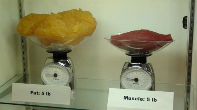 #20 -  5 libras de Gordura x 5 Libras de Músculo.
