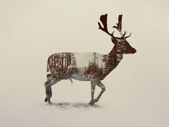 Fotos-de-dupla-exposição-animais-e-floresta-17