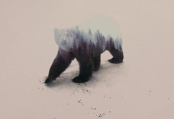 Fotos-de-dupla-exposição-animais-e-floresta-19