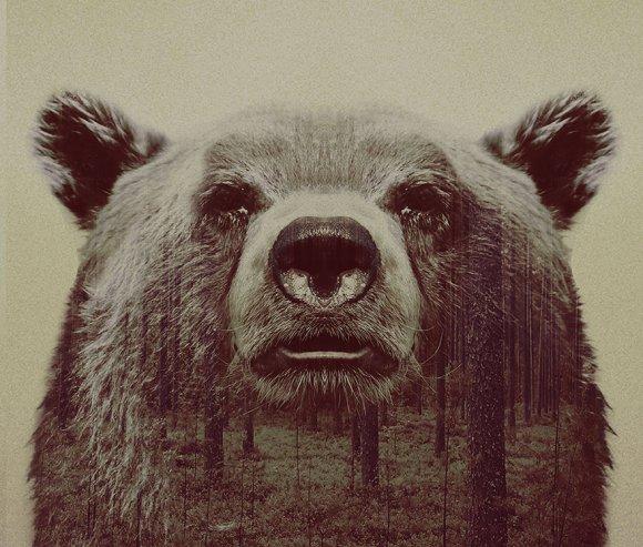 Fotos-de-dupla-exposição-animais-e-floresta-20