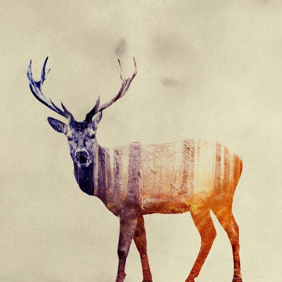 Fotos-de-dupla-exposição-animais-e-floresta-21