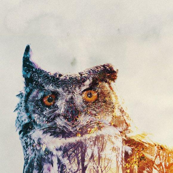 Fotos-de-dupla-exposição-animais-e-floresta-23