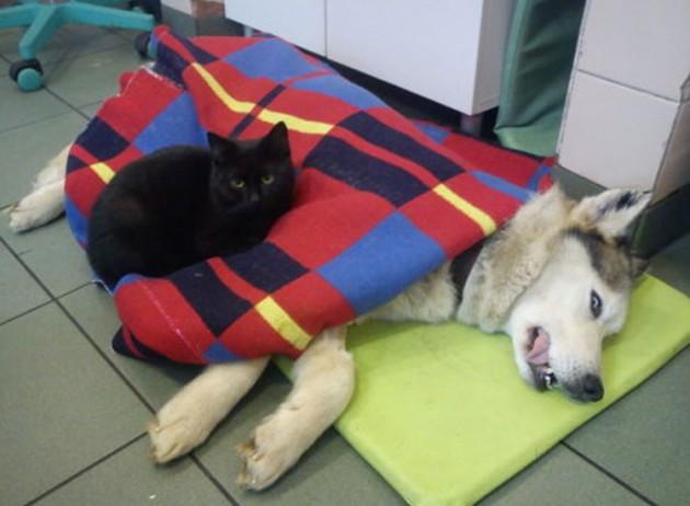 gato-ayuda-animales-heridos