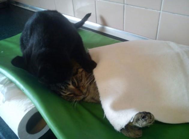 gato-cuida-animales-heridos