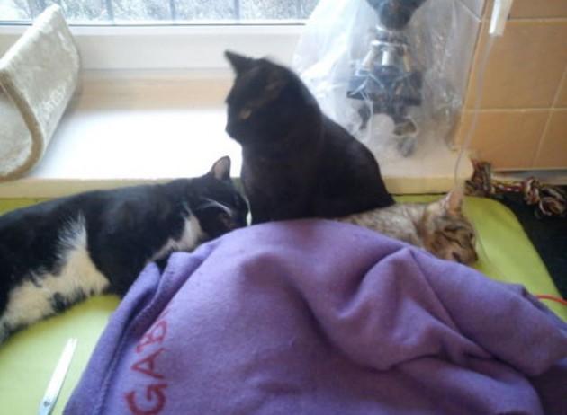 gato-refugio-polonia