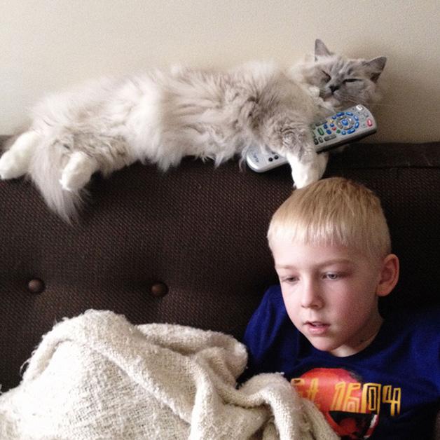 gatos-filhos1