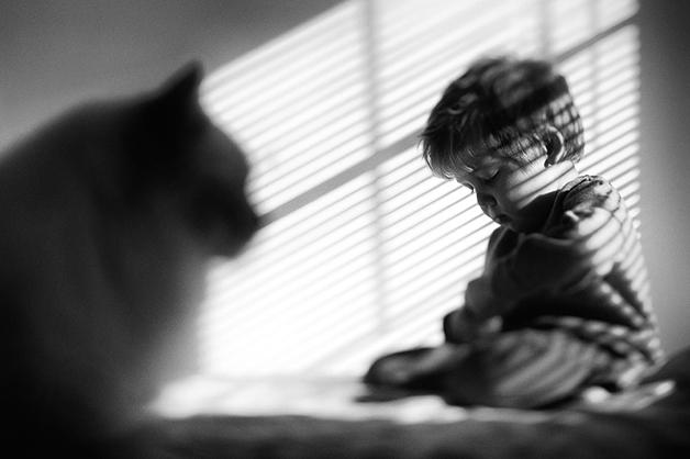 gatos-filhos20