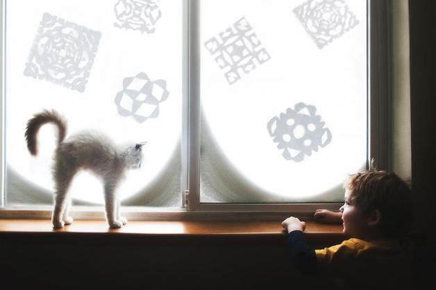 gatos-filhos4