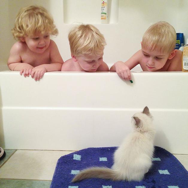 gatos-filhos5