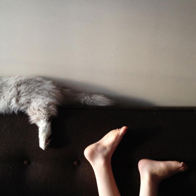 gatos-filhos6