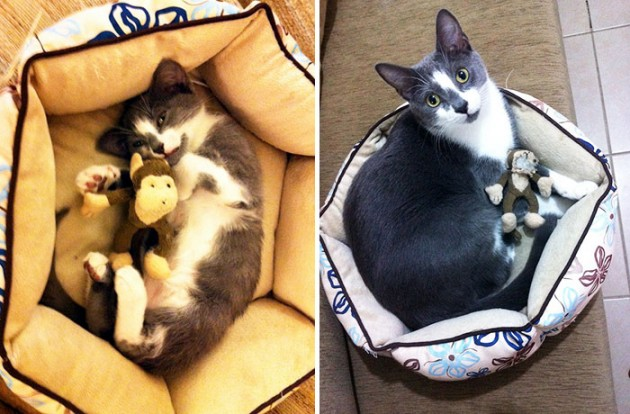 pets-growing-up-with-toys-1101__700