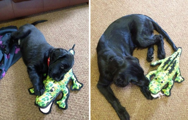 pets-growing-up-with-toys-20__700