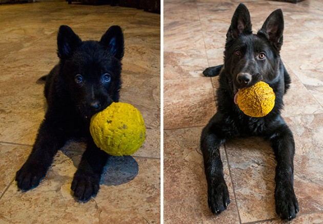 pets-growing-up-with-toys-21__700