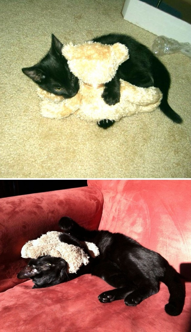 pets-growing-up-with-toys-7__700 (1)