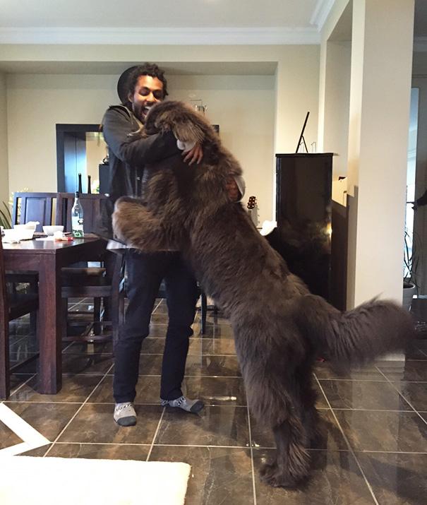 big-dog-funny-animal-photos-1__605