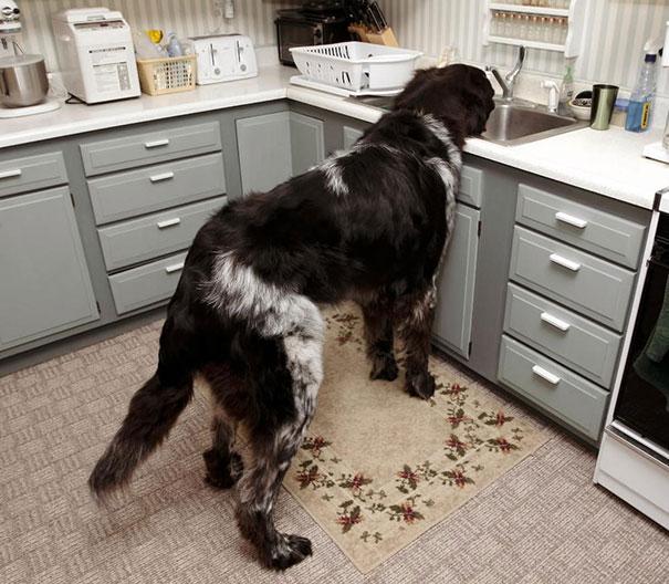 big-dog-funny-animal-photos-24__605