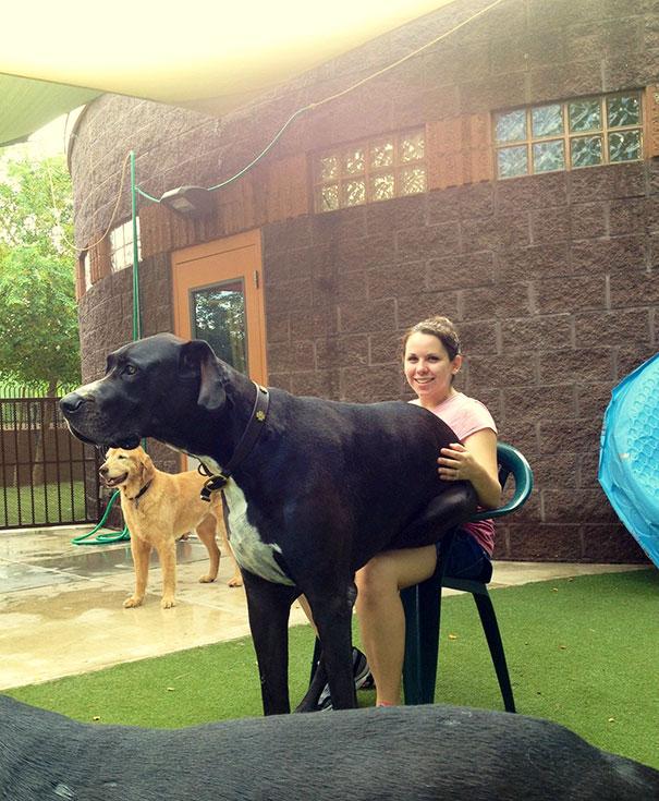 big-dog-funny-animal-photos-32__605
