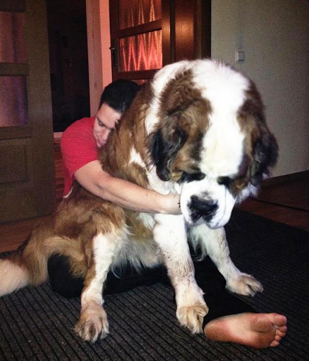 big-dog-funny-animal-photos-62__605