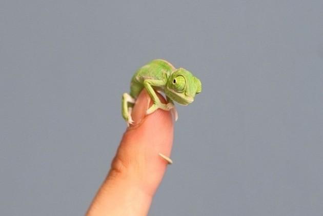 35 objetos minúsculos que você não vai acreditar que existam 8