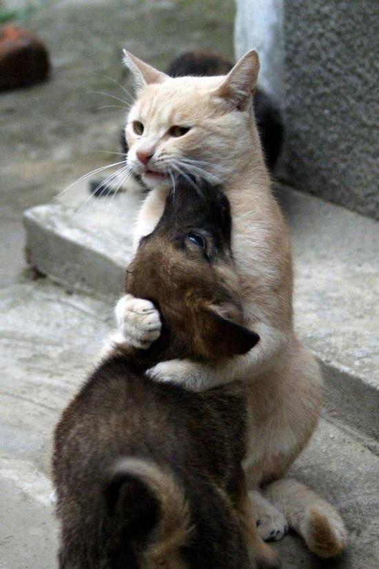 Vem aqui e me dá um abraço :)