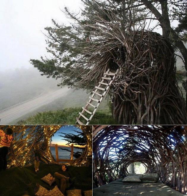 #12 - Ninho na árvore