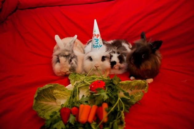 aniversario dos animais 15