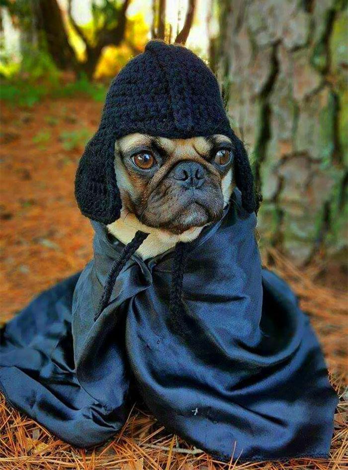 crochet-handmade-hats-pets-iheartneedlework-11__700