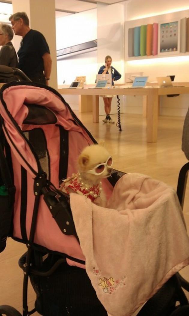 15 Coisas e pessoas malucas flagradas dentro das lojas da apple 2