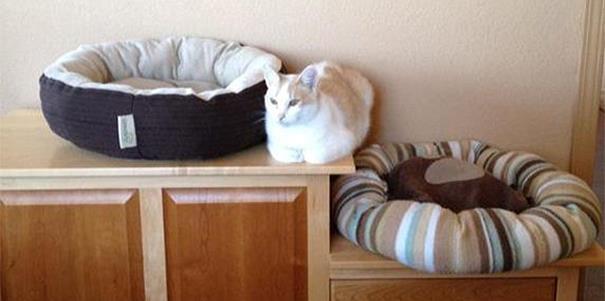 23 Imagens pra você tentar entender a lógica dos gatos. (11)