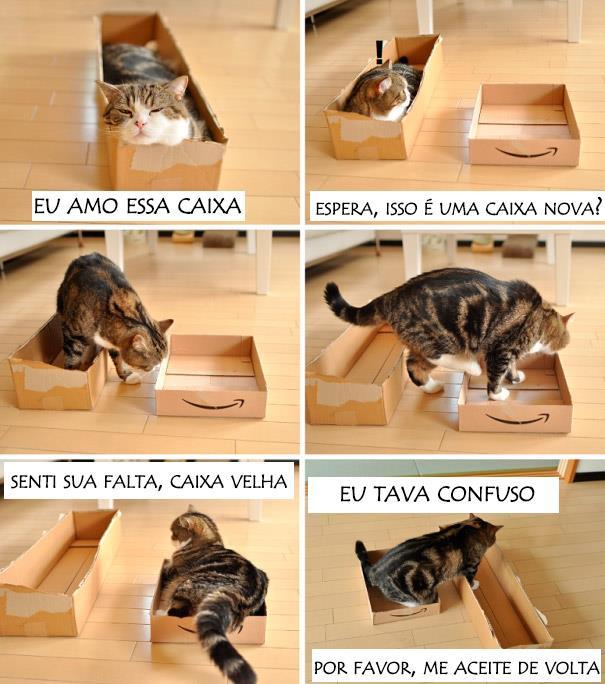 23 Imagens pra você tentar entender a lógica dos gatos. (12)