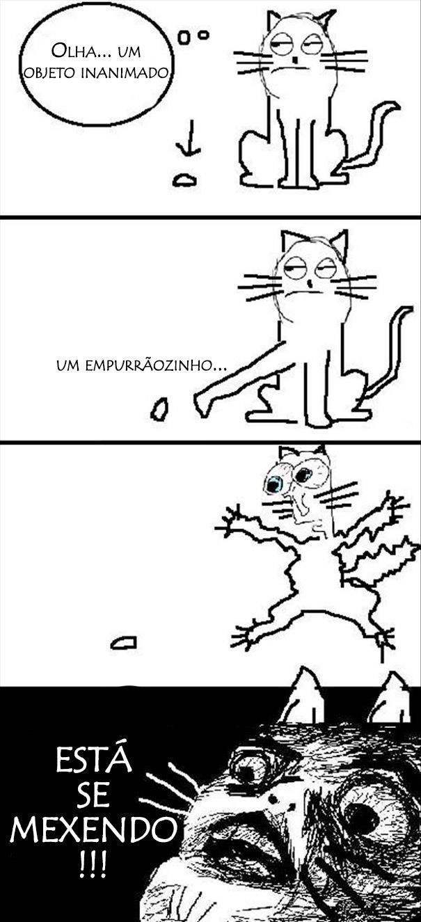 23 Imagens pra você tentar entender a lógica dos gatos. (16)