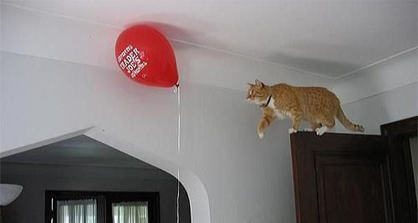 23 Imagens pra você tentar entender a lógica dos gatos. (21)