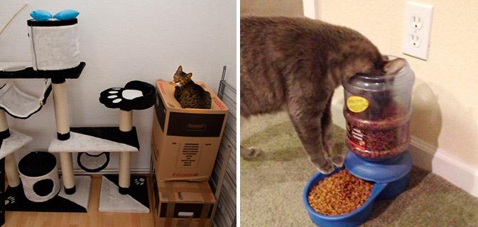 23 Imagens pra você tentar entender a lógica dos gatos. (25)