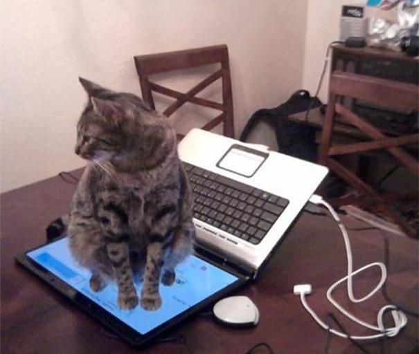 23 Imagens pra você tentar entender a lógica dos gatos. (6)