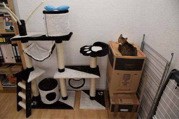 23 Imagens pra você tentar entender a lógica dos gatos. (Ou ficar com ainda mais dúvidas)